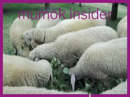 Filmstill von Schafen auf Wiese