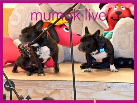 Zwei Hunde vor einem Mikrofon